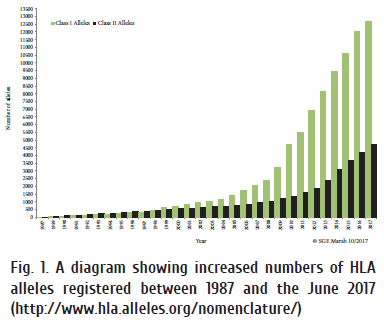 62-66 Fig. 1. A diagram showing increased numbers of HLA.png