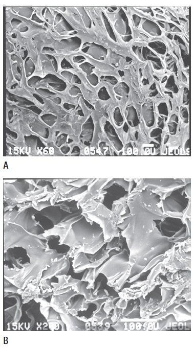 66-71 Figure 1. A micrograph of chitosan-based.png